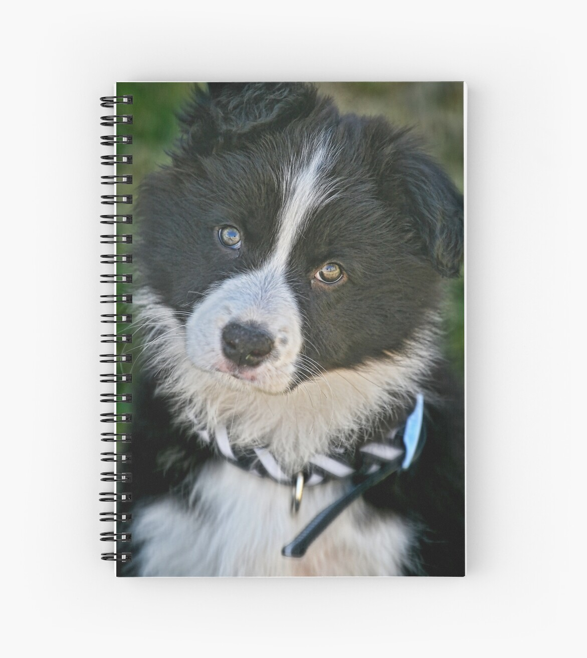The baby Border Collie by Murray Swift