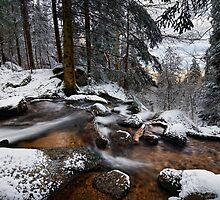 Winter Forest by Michael Breitung