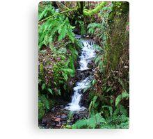 Forest Stream - Glenabo Woods, Cork, Ireland Canvas Print