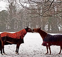 Snowy Horse Kiss by NeilAlderney