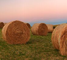Gippsland hay rolls  by Tony Middleton