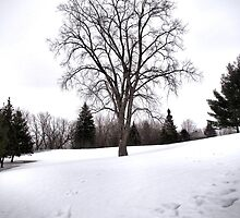 Tree in Landscape Early Spring Snow by M Sylvia Chaume