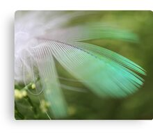 Feathery colours Canvas Print