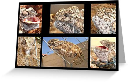 Chameleon Collage by taiche