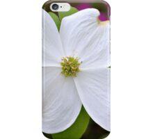 Dogwood Bloom iPhone Case/Skin
