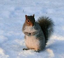 Winter squirrel at Edinburgh Botanics by Pamela Baker