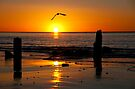 Jetty Sunset by Andrew Dickman