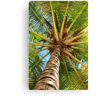 Caribbean Palm Canvas Print