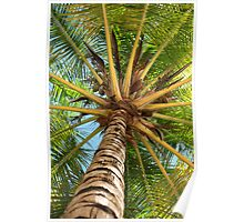 Caribbean Palm Poster