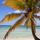 Caribbean Palm by Tom Prokop