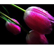 Trio Tulips. Photographic Print