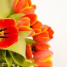 Tulips by Tom Prokop