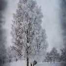 White with frosts birches by Veikko  Suikkanen