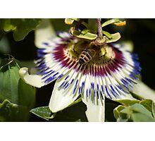 Pollen Dust Photographic Print