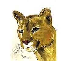 Wildcat Photographic Print