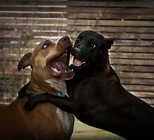 Kiss me! by Craig Hender