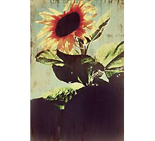 My Only Sunshine Photographic Print