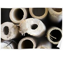 Object: Cross section of Bamboos Poster