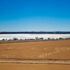 Wheat Fields by Juanita Marchesani