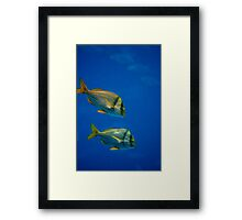The Great Blue Framed Print