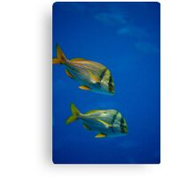 The Great Blue Canvas Print