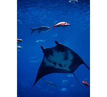 Underwater Flight Photographic Print