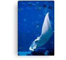 Underwater Wings Canvas Print