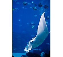 Underwater Wings Photographic Print