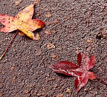 Leaves on bitumen by digipix