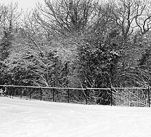 The fence by Steve plowman
