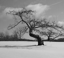 Lonely Winter in Connecticut  by Joe Don Richardson