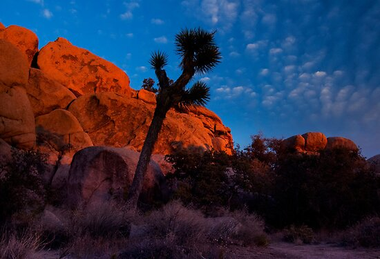 Glowing Rocks, Joshua Tree by Justin Mair