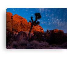 Glowing Rocks, Joshua Tree Canvas Print