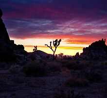 Clouds at Sunset, Joshua Tree by Justin Mair