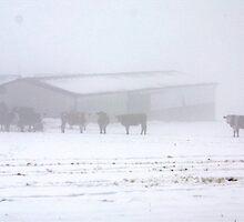 Fog on the farm by missmoneypenny