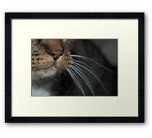 Close-up! Framed Print