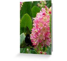 Huge Bee on Pink Bloom Greeting Card