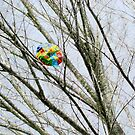 Balloon in Tree by Misti Rainwater-Lites