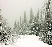 Mountain Snow by Gregory Ewanowich