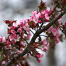 BUDS & BLOSSOMS of SPRINGTIME by Ruth Lambert