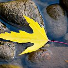 Fall Leaf in Boise River by Jim Terry