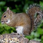 Squirrel at Work by Barry Goble