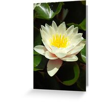 White Water Lily Flower Greeting Card