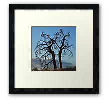Gnarly Trees Framed Print