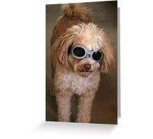 Do you think the paparazzi will recognise me with these on? Greeting Card