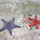 Star Fish by inglesina