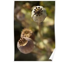 Poppyheads Poster