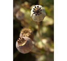 Poppyheads Photographic Print