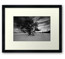 The Old Plum Tree BW Framed Print