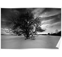 The Old Plum Tree BW Poster